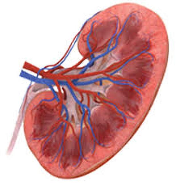 단백뇨 원인, 증상에 대해 자세히 알아보자 - 검사방법