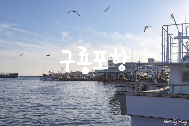 [포항 여행] 제철맞은 포항 과메기의 원조 구룡포의 활기넘치는 항구