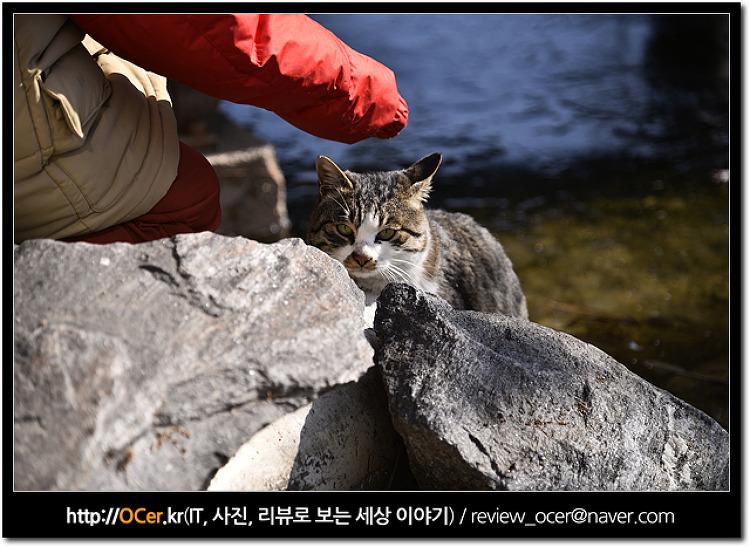 애완동물 반려동물 사진 니콘 D5300 으로 잘 찍는 방법