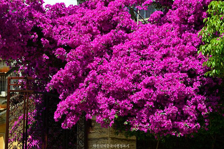 봄의 성 곤명(昆明 쿤밍)을 여행하는 법 【上】
