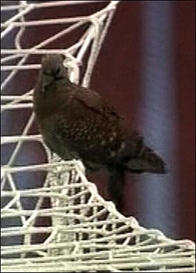 영국을 향한 비둘기의 저주(2010 월드컵 이모저모)