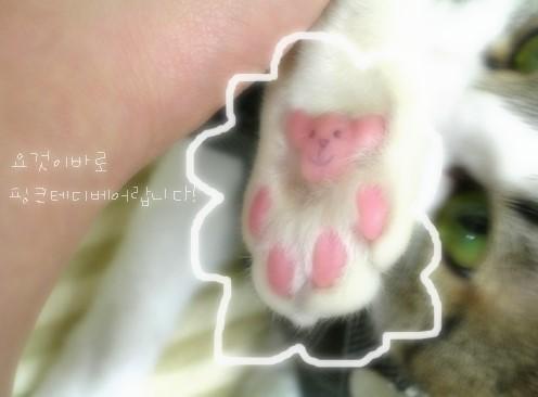곰도리 발바닥젤리 - 핑크테디베어