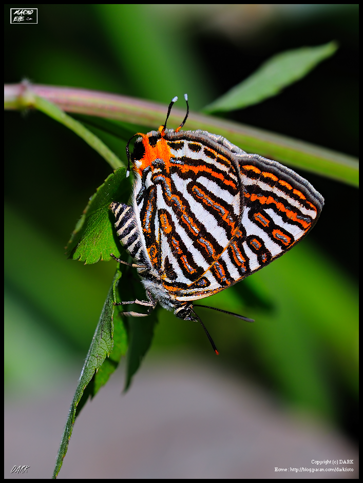 essay on butterfly insects A butterfly is a usually day-flying insect of the order lepidoptera butterflies were the last major group of insects to appear on the planet.