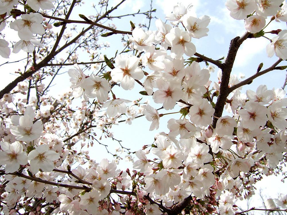 일본여행 - 다음 이야기 : 1847B947513CB89C299CF7