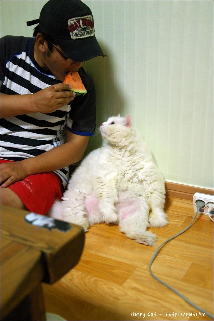 거대고양이 양군