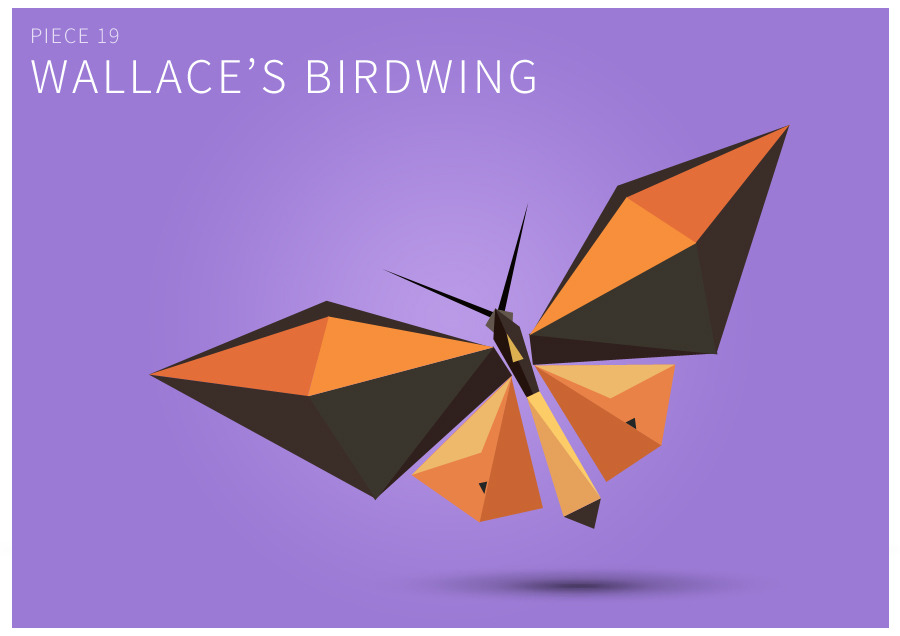 Piece 19 Wallace's birdwing
