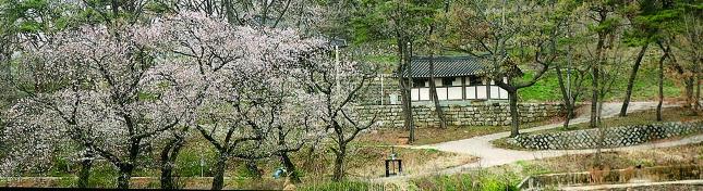 전국 벚꽃 길 명소