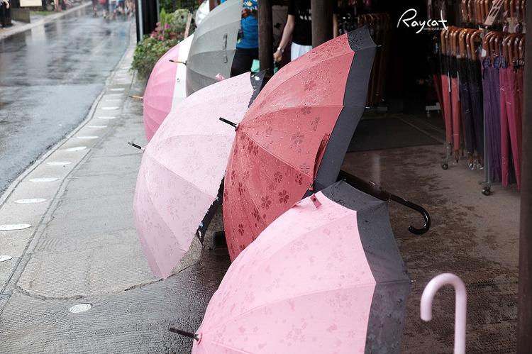 유후인 벚꽃 우산