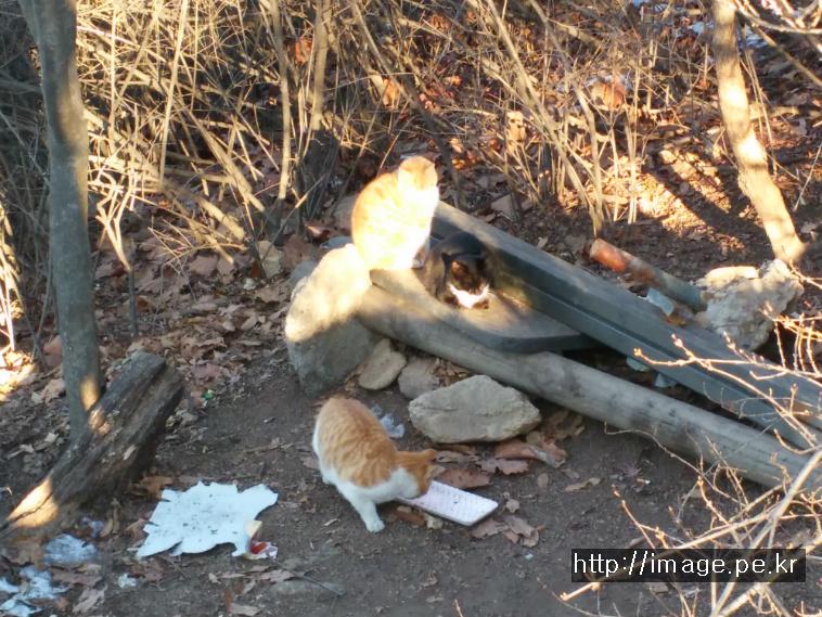 용마산 정상의 고양이들