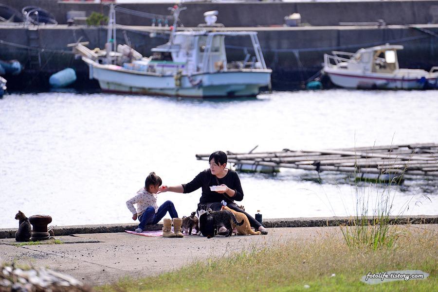 [일본/후쿠오카] 고양이섬 아이노시마(相島) 다시 만난 고양이들