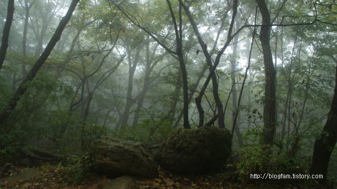 비오는 숲속