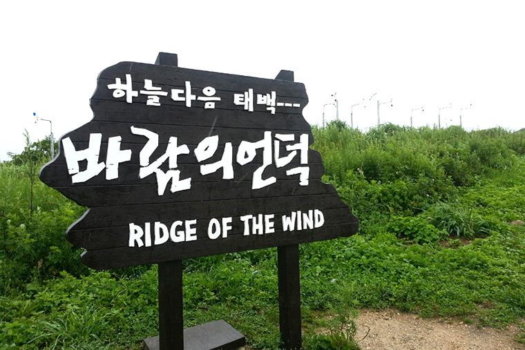 강원도여행지 태백여행코스 바람의 언덕