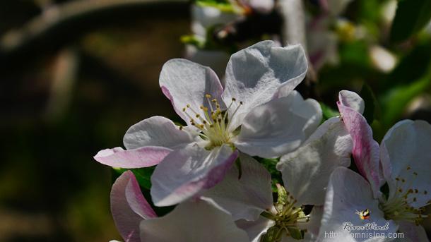 잎사귀와 함께피는 봄꽃들