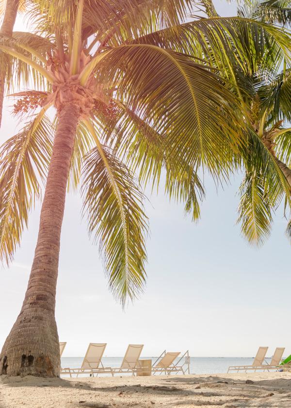 열대 해변 야자수 나무 스톡사진 이미지(jpg)모음
