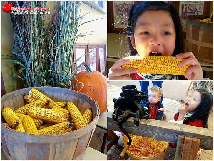 캐나다 농업 식품 박물관 옥수수 낟알 분리하기