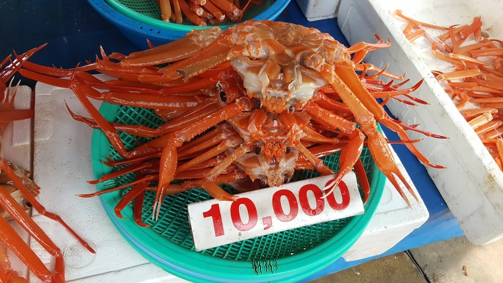 [주문진항]싱싱한 홍게판매점 수진호