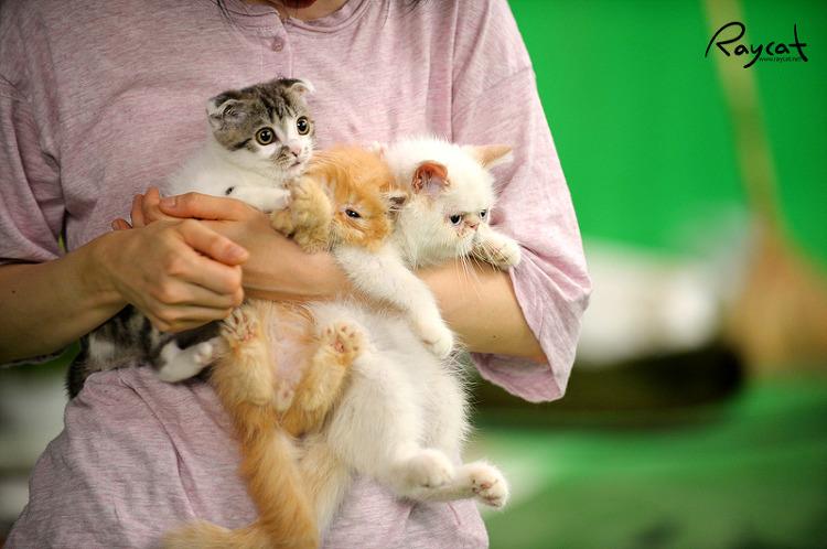 탈출했다가 다시 오는 고양이들