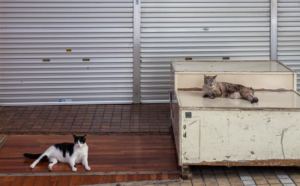 오키나와 사쿠라자카 길 고양이