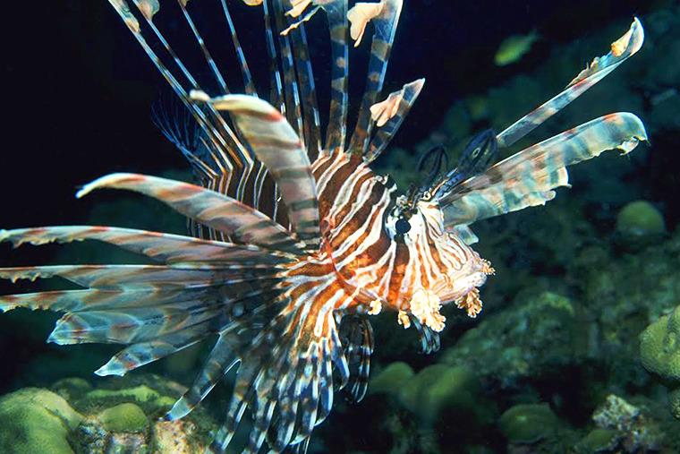 신기한 물고기, 신기한 해양생물, 해리포터 시리즈, 쏠배감펭, 물고기 종류