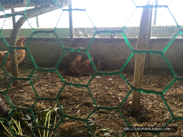 동물농장 토끼