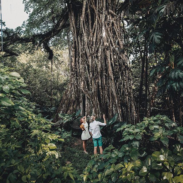 로타 요정나무