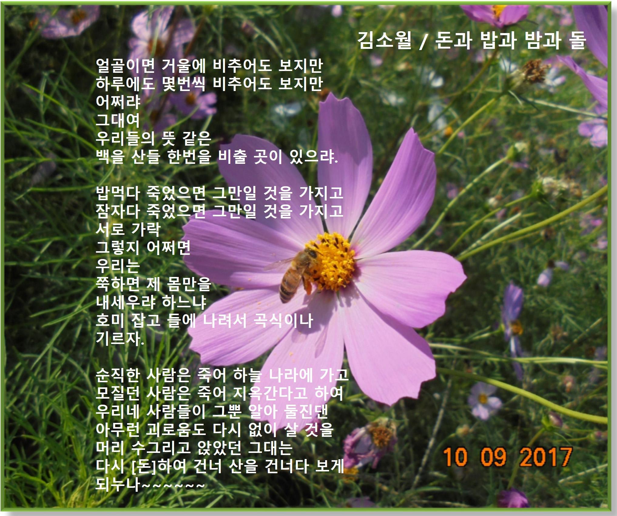 이 글은 파워포인트에서 만든 이미지입니다 돈과 밥과 밤과 돌 / 김소월