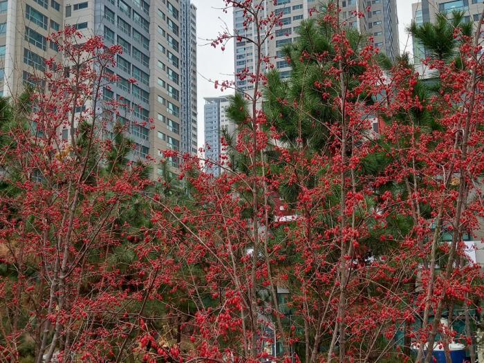 겨울속 열매