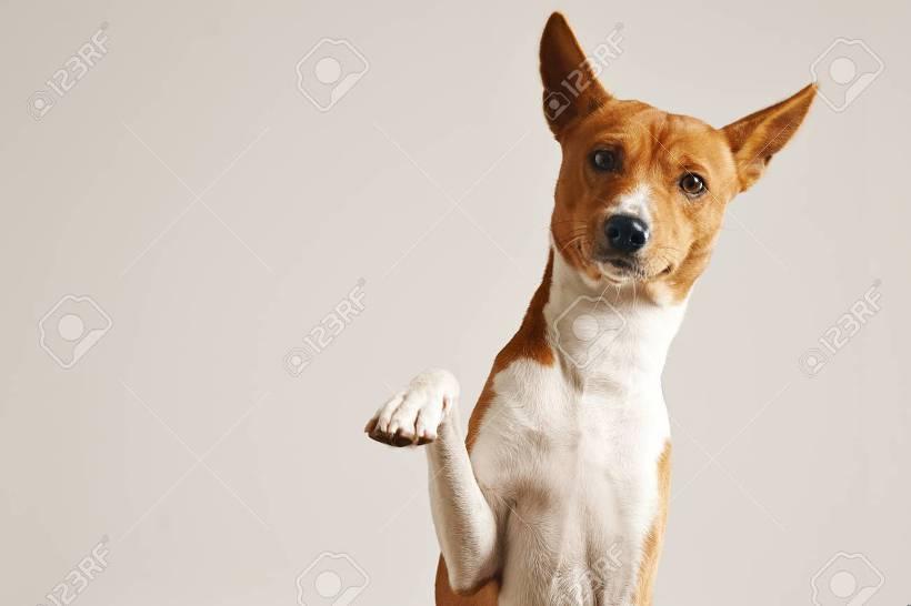 인사하는 강아지