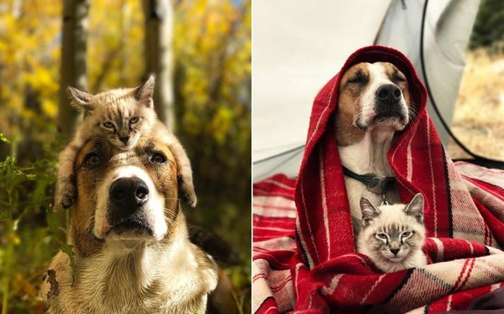 함께라면 에베레스트 산이라도 오를 강아지와 고양이