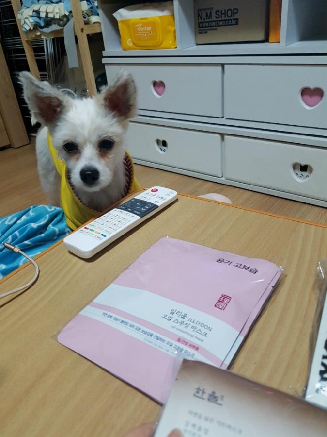 송송이 사진