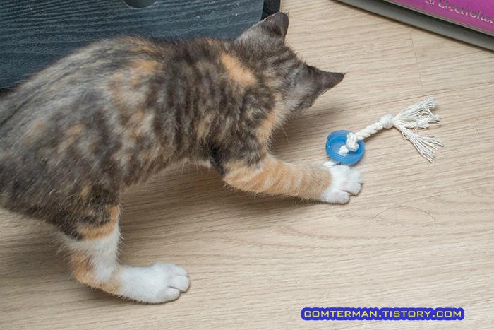고양이 장난감 면실 페트병 뚜껑