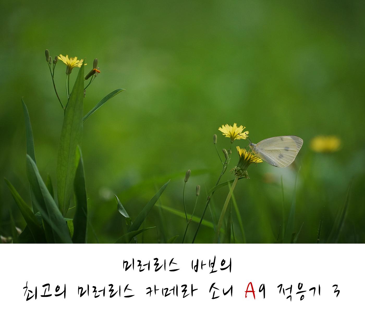 [소니 A9 스포츠 체험단 3] 소니 초망원 단렌즈의 현실적인 대안
